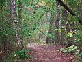 Kowanowko forests, gm. Oborniki (13).JPG