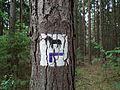 Kowanowko forests, gm. Oborniki (28).JPG