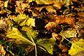 Kralupy nad Vltavou, dvůr Strachov, podzimní listí.jpg