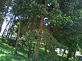 Kupres01573.JPG