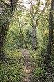 Kurcaparti tanösvény Mindszent - panoramio (49).jpg