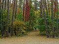 Kyiv Sovky Park7.JPG
