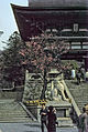Kyoto-012 hg.jpg