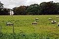 L'Ings Farm - geograph.org.uk - 591500.jpg