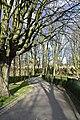 L'arbre majestueux (25726101093).jpg