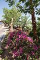 L'hôtel à Eilat - Israël (7582486762).jpg