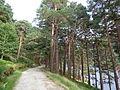 Lago superiore Glendalough 08.JPG