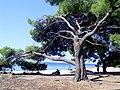 Lagomandra, Sitonia, Grčka - panoramio (3).jpg