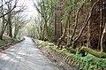Lane through Steephill Wood - geograph.org.uk - 1235218.jpg