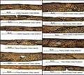 Lapa do Santo - Sepultamento 22 - Fratura perimortem osso longo tipo 2.jpg