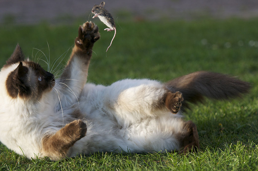 Cats Eating Grass Urniary Issues