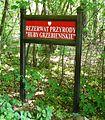 Las Bytynski (Huby Grzebieniskie).JPG