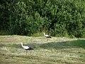 Latvian countryside - panoramio - Paul Berzinn.jpg
