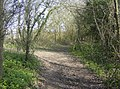 Layden Lane - geograph.org.uk - 396724.jpg