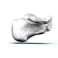 Left Calcaneus05 medial view.png