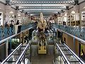 Lille museum histoire naturelle.JPG