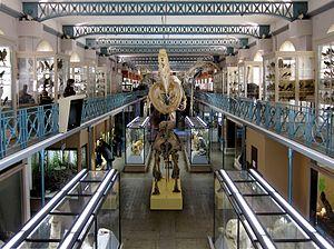 Musée d'Histoire Naturelle de Lille - Interior