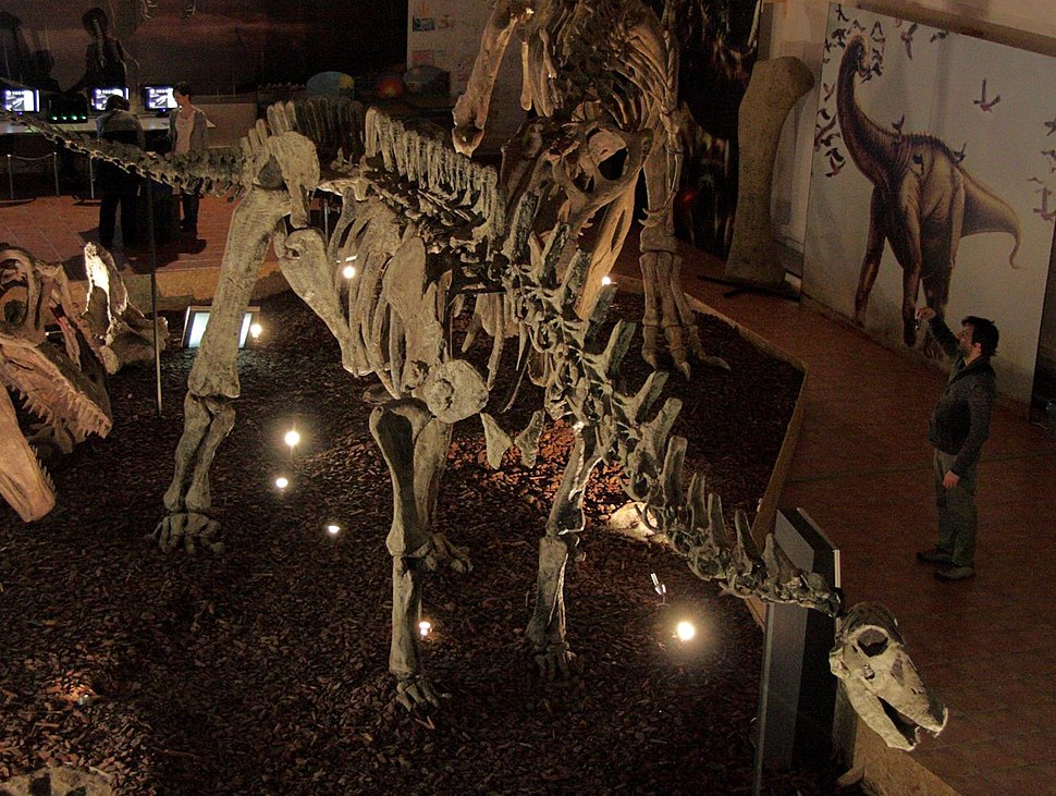 Limaysaurus skeleton