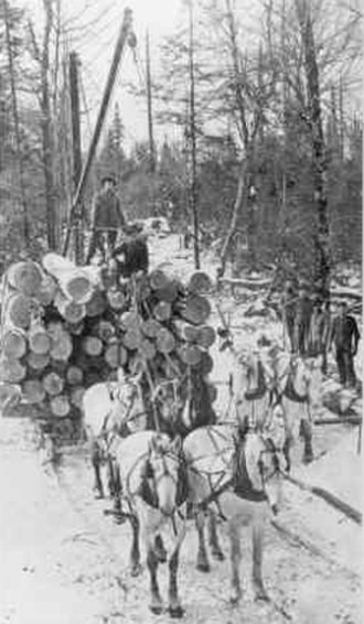 Taylor County, Wisconsin - A crew hauling logs for the Fountain-Campbell Lumber Company in northwest Taylor County, 1909