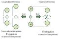 Logitudinal and Transverse Vibrations.png