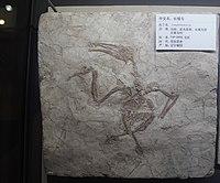 Longirostravis-Tianjin Natural History Museum.jpg