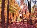 Lost in the Woods in Minnesota.jpg