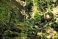 Lyon Arboretum - Aihualama Falls (8330355645).jpg