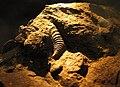 Macrofósiles de Conchas - panoramio.jpg