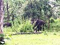 Madumalai Forest 1.jpg