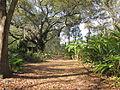 Magnolia Lane Plantation Road.JPG