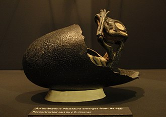 Jack Horner (paleontologist) - Reconstructed cast by Horner of a Maiasaura emerging from its egg