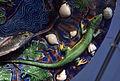Makk Köln Plat Bernard Palissy 30122014 5.jpg