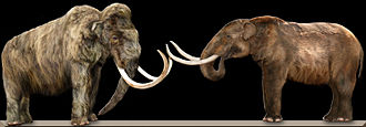 Woolly mammoth - Comparison between a woolly mammoth (left) and an American mastodon (right)