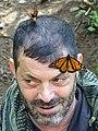 Man with Monarchs - Piedra Herrada - Monarch Butterfly Sanctuary - Near Valle de Bravo - Mexico (16309533799).jpg