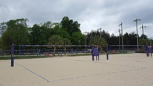 LSU Tigers and Lady Tigers - Mango's Beach Volleyball Club