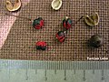 Maprounea guianensis, pinga-orvalho - Flickr - Tarciso Leão (4).jpg