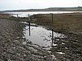 Marshland meets shingle - geograph.org.uk - 1181054.jpg