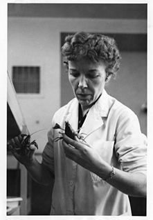 Mary Alice McWhinnie American biologist