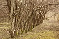 Mežmuižā - panoramio.jpg