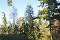 Mežs, Suntažu pagasts, Ogres novads, Latvia - panoramio.jpg