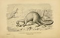 Megalosaurus bucklandii.jpg