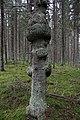 Metsää Käärmekallion alueella, Liesjärven kansallispuisto, Tammela, 15.11.2014 (5).JPG