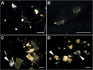 Microplastics Very small pieces of plastic that pollute the environment