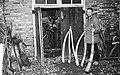Midwinterhoornmaker aan het werk, Bestanddeelnr 909-0834.jpg