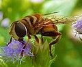 Mimetismo abelha.jpg