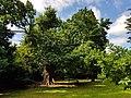 Minchenden Oak Garden, Southgate, London N14 20170804 104856 (40831025323).jpg