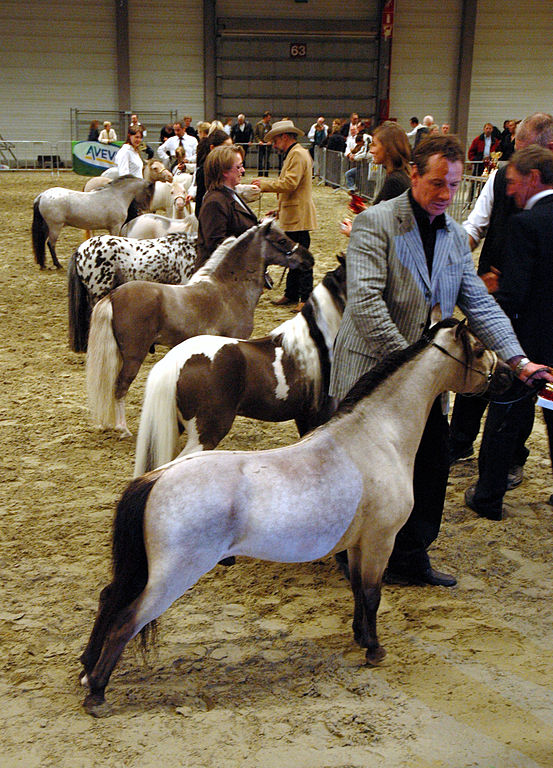 Paint Ponies For Sale In Iowa