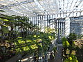 Miracle Planet Museum of Plants in 2013-4-27 No,4.JPG