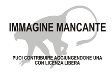 Immagine di Phaner pallescens mancante