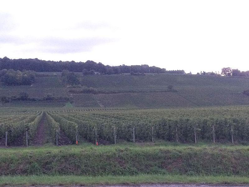 Les vignobles du Champagne à perte de vue... De quoi donner l'eau à la bouche 😉